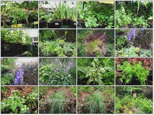 Все многолетние цветы для сада фото